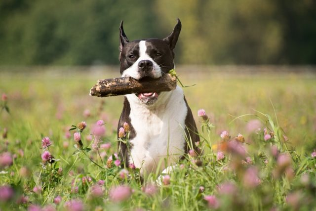 How to Naturally Boost Your Dog's Immune System