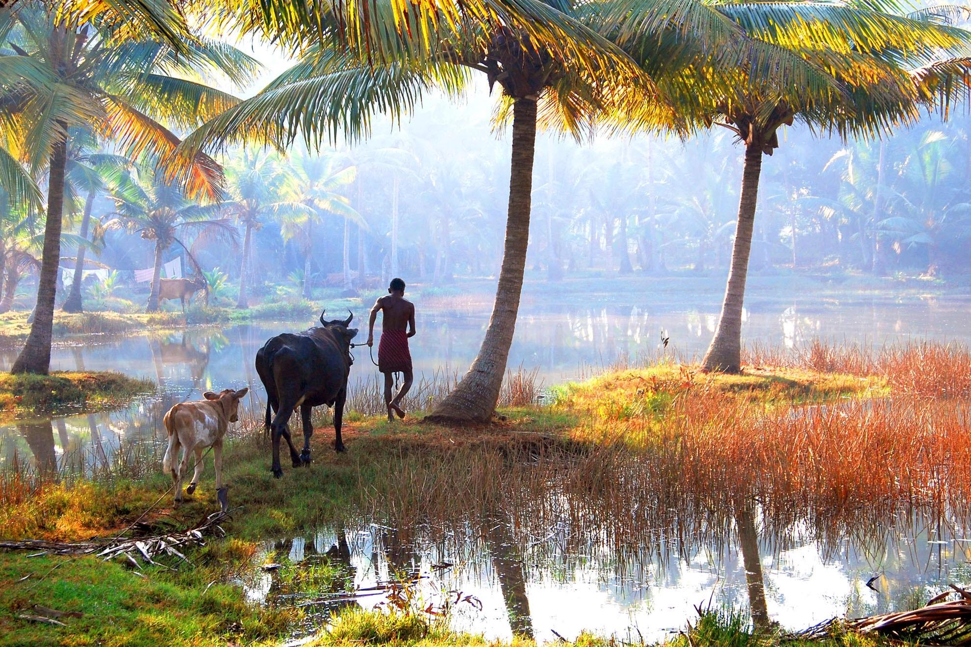 Village Life In Kerala