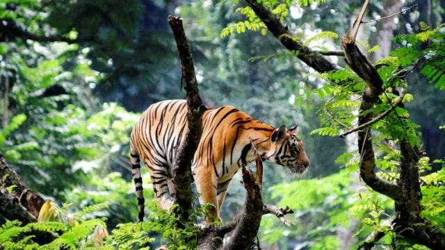Wild Life in Kerala