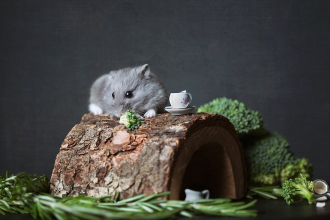 5 Unique Pets for Your Home That are Easy to Care